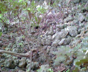 主郭の石積み