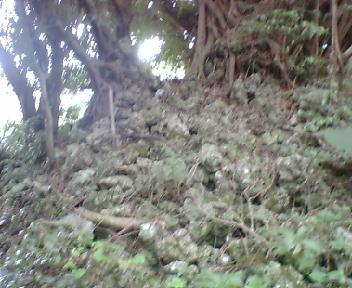木の根が絡んだ石積み