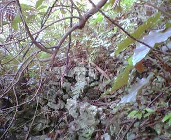 グスク北側の石積み