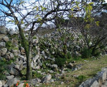 平郎門からの参道沿いの石積み。