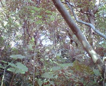 木が生い茂ったグスク内