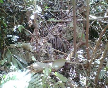 森の中で石が並んでいます