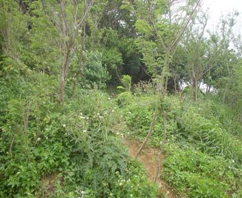 グスク標柱脇の道
