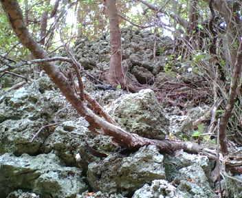 石積みの一角