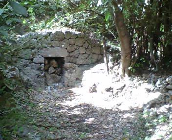 林の一角の墓