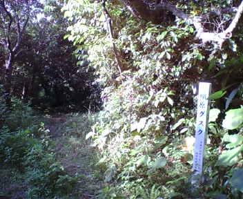 森の中にあるグスクの標柱