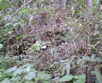 雑草に覆われた石積み