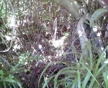 標柱付近の藪の中