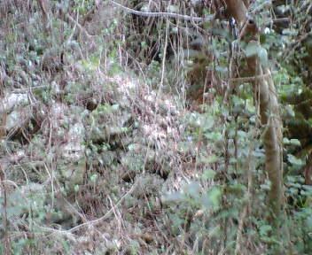 丘の東に見える石積み