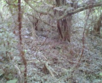 石積みを覆う蔦