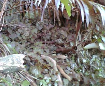 蔦に覆われた石積み