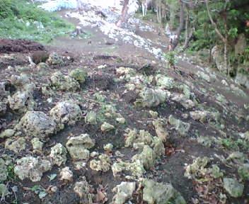 斜面に石・岩が多数