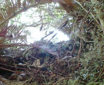 木が生い茂った岩