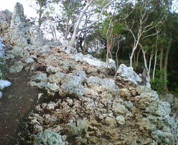 岩が密集しています