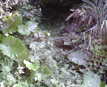 雑草が茂った入り口