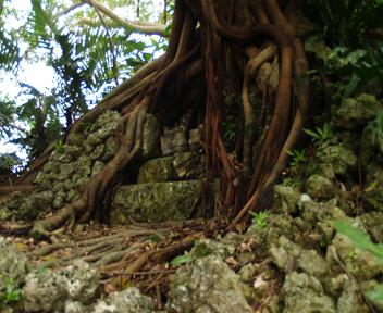 木の根が絡んだ拝所