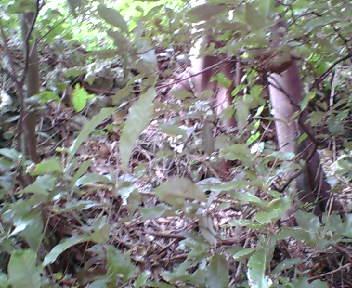 グスク内は木が生い茂っています