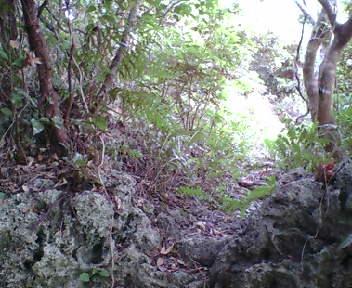 段差を登ったところにある岩