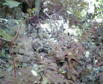 岩の根元にある石積み