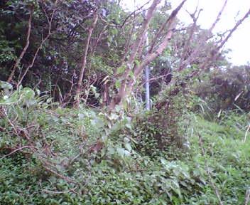 グスクがある丘の斜面下
