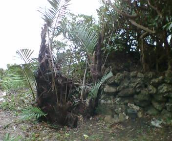 拝所と石積み