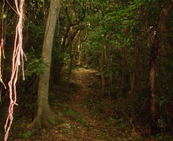 森の奥から東へ向かう道