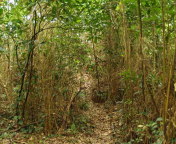 上城カーからさらに奥へ進む道