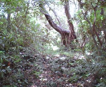 水タンクの北東の林