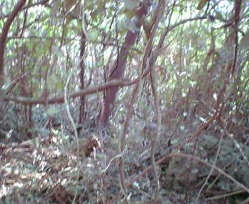 崖の上は木が生い茂っています