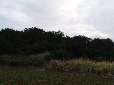 集落から見たグスク